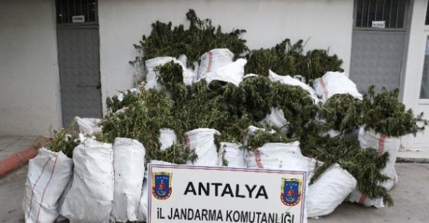 Aksu Jandarmasından uyuşturucu operasyonu