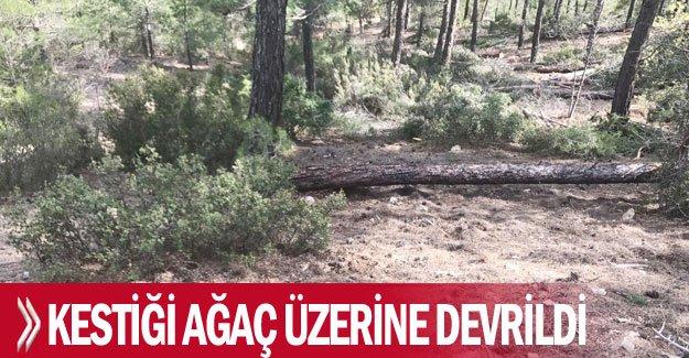 Kestiği ağaç üzerine devrildi