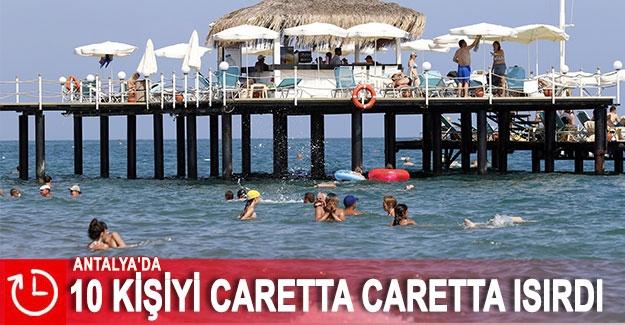 Antalya'da 10 kişiyi caretta caretta ısırdı