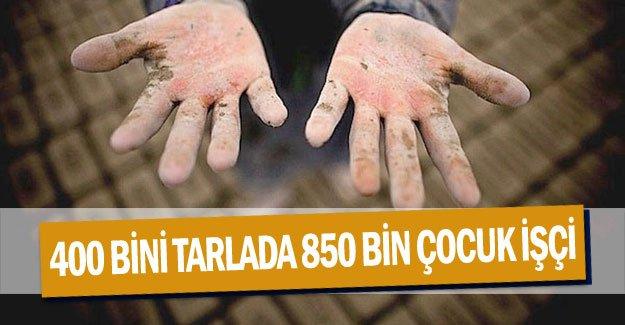 400 BİNİ TARLADA 850 BİN ÇOCUK İŞÇİ