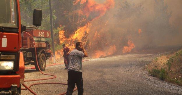 Antalya'nın ciğerleri yandı