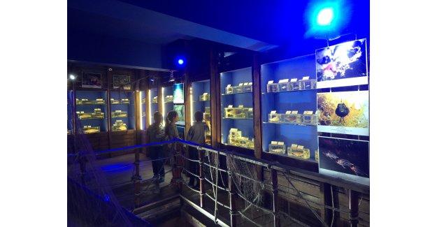 İstilacı türler müzede