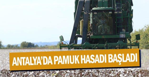 Antalya'da pamuk hasadı başladı