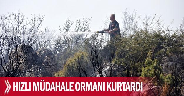 Hızlı müdahale ormanı kurtardı