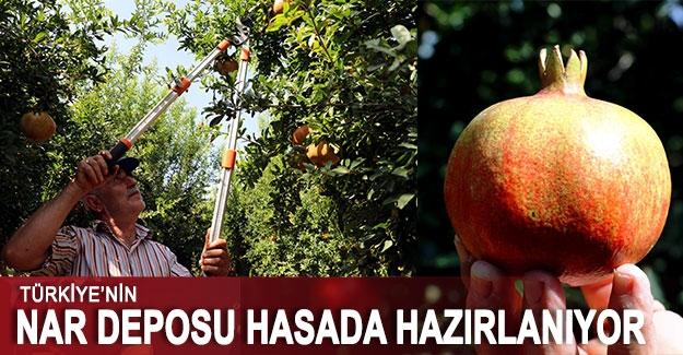 Türkiye'nin nar deposu hasada hazırlanıyor
