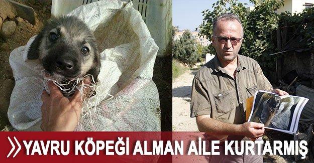 Yavru köpeği Alman aile kurtarmış