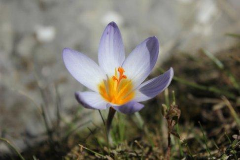4 doğal çiçek soğanı koruma altına alındı