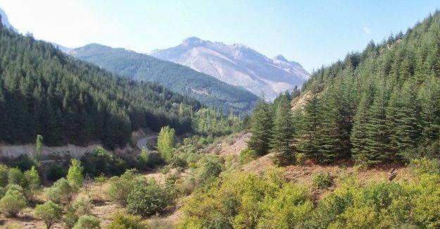 Ormancılık sempozyumu Antalya'da