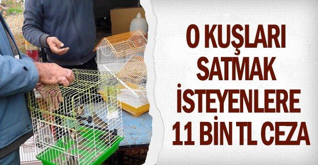 O kuşları satmak isteyenlere 11 bin TL ceza