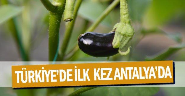 Türkiye'de ilk  kez Antalya'da