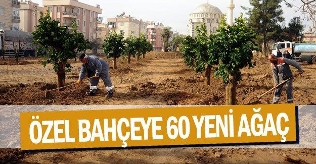 Özel bahçeye 60 yeni ağaç