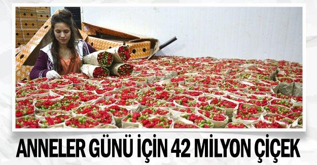 Anneler günü için 42 milyon çiçek