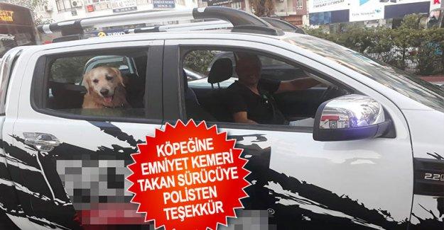 Köpeğine emniyet kemeri takan sürücüye polisten teşekkür