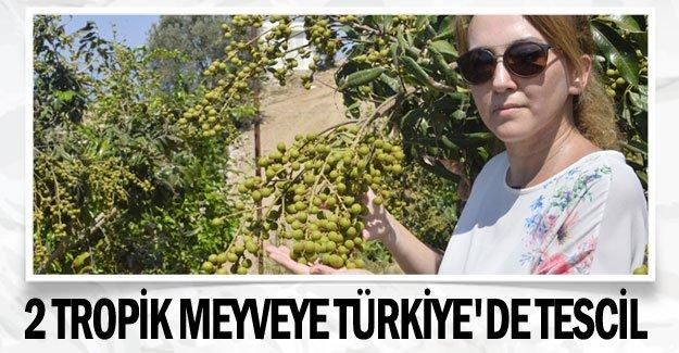 2 tropik meyveye Türkiye'de tescil