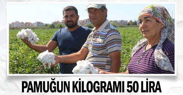 Pamuğun kilogramı 50 lira