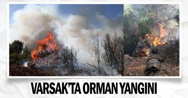Varsak'ta orman yangını