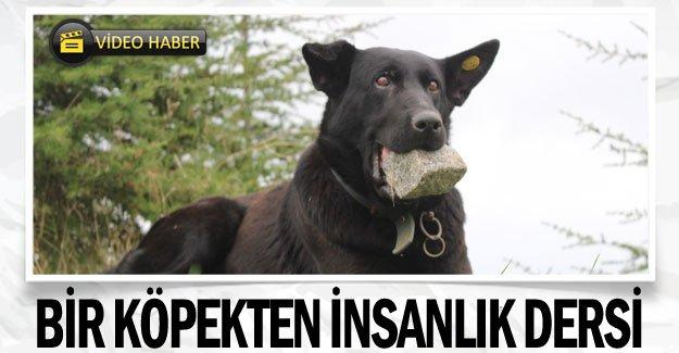 Bir köpekten insanlık dersi