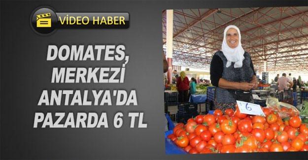 Domates, merkezi Antalya'da pazarda 6 TL
