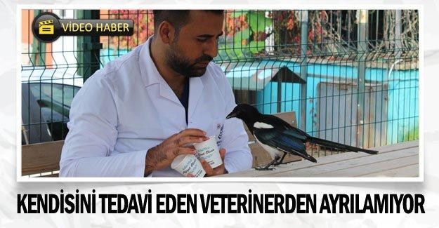 Kendisini tedavi eden veterinerden ayrılamıyor