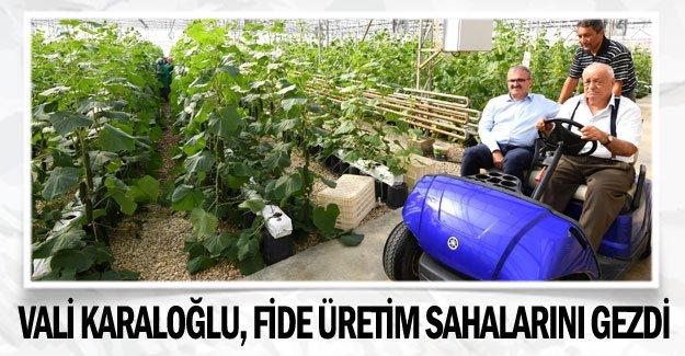 Vali Karaloğlu, fide üretim sahalarını gezdi
