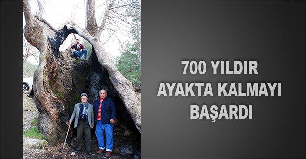 700 yıldır ayakta kalmayı başardı