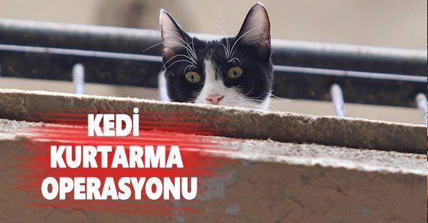 Kedi kurtarma operasyonu