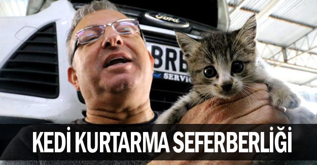 Kedi kurtarma seferberliği