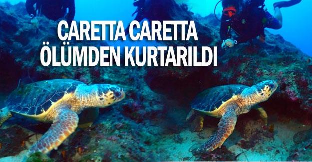Caretta caretta ölümden kurtarıldı