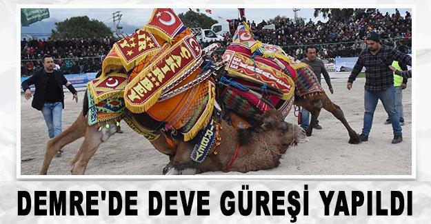 Demre'de deve güreşi yapıldı