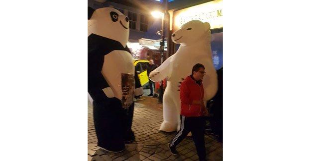 Pandayla kutup ayısı Kaleiçi'nde