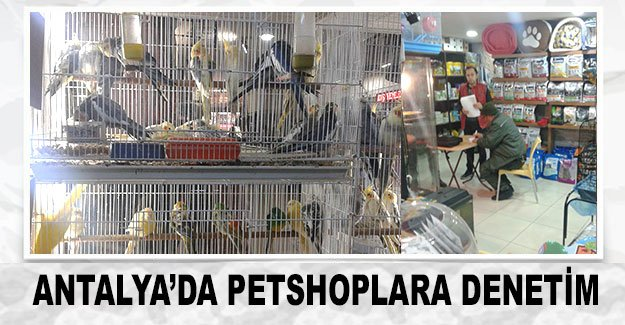 Antalya'da petshoplara denetim