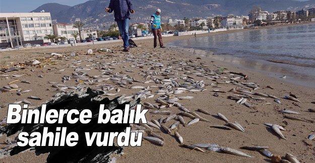 Binlerce balık sahile vurdu