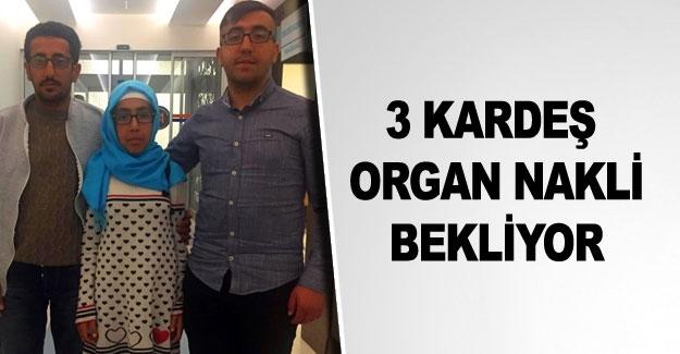 3 kardeş, organ nakli bekliyor