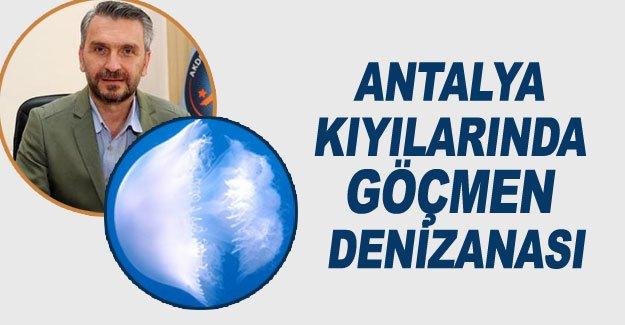 Antalya kıyılarında göçmen denizanası