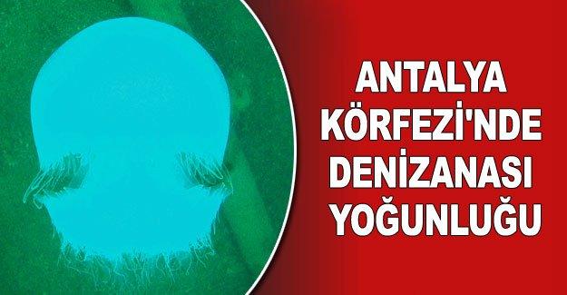 Antalya Körfezi'nde denizanası yoğunluğu