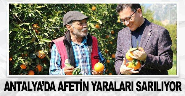Antalya'da afetin yaraları sarılıyor