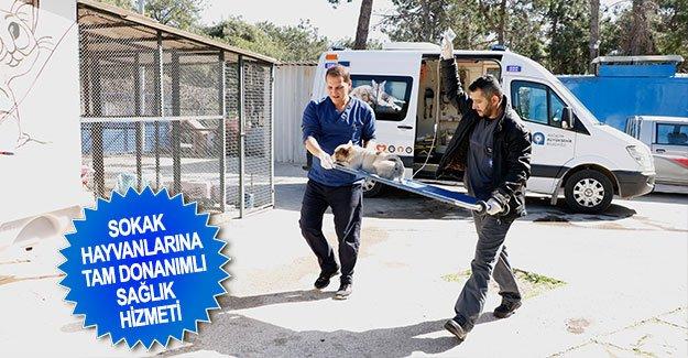 Sokak hayvanlarına tam donanımlı sağlık hizmeti