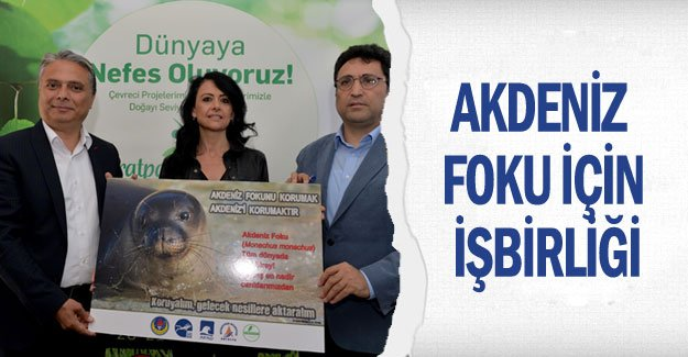 Akdeniz foku için işbirliği