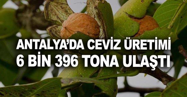 Antalya'da ceviz üretimi 6 bin 396 tona ulaştı
