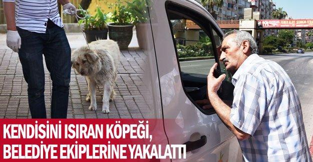 Kendisini ısıran köpeği, belediye ekiplerine yakalattı