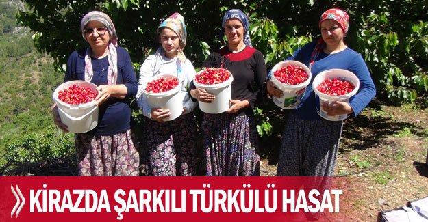 Kirazda şarkılı türkülü hasat