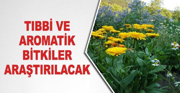 Tıbbı ve aromatik bitkiler araştırılacak