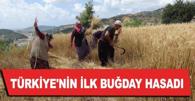Türkiye'nin ilk buğday hasadı