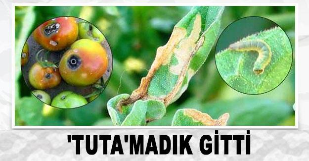 'TUTA'MADIK GİTTİ