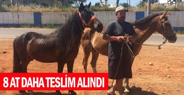 8 at daha teslim alındı