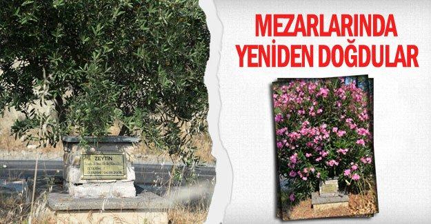 Mezarlarında yeniden doğdular
