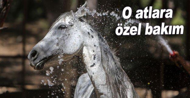 O atlara özel bakım