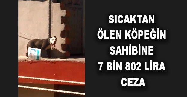 Sıcaktan ölen köpeğin sahibine 7 bin 802 lira ceza