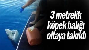 3 metrelik köpek balığı oltaya takıldı