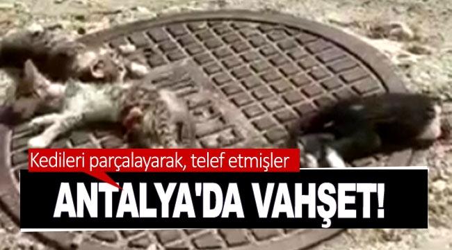 Antalya'da vahşet! Kedileri parçalayarak, telef etmişler
